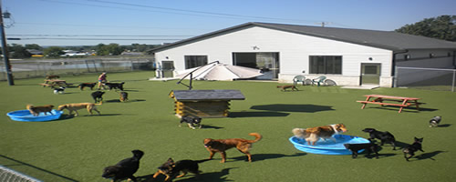 Diggity Dog Daycare LaCrosse Wisconsin
